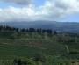 Kaffeeplantage bei San José