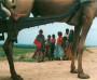 durch Rajasthan